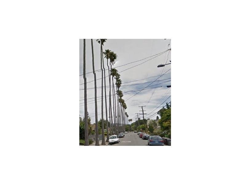 Oakland Designated Landmark 22: Arbor Villa Palm Trees (Image A) Image