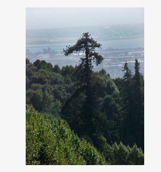 Oakland Designated Landmark 38: Leona Park* (Image B) Image