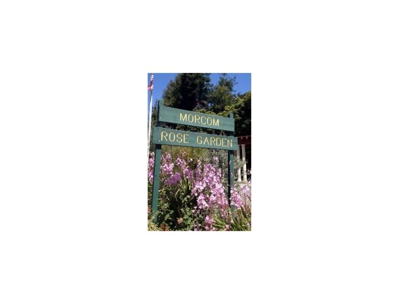Oakland Designated Landmark 45: Morcom Amphiheater of Roses (Image A) Image
