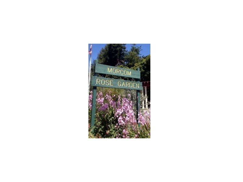Landmark 45 A Morcom Amphitheater of Roses Resized